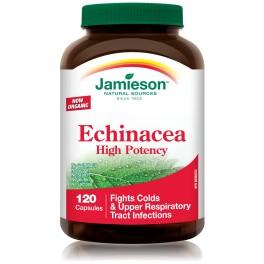 Echinacea Purpurea High Potency 120 Cap